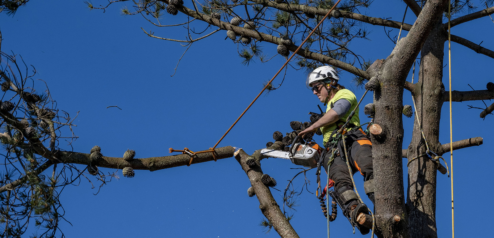 reasonable tree service near me