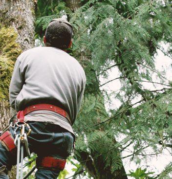 tree jobs near me