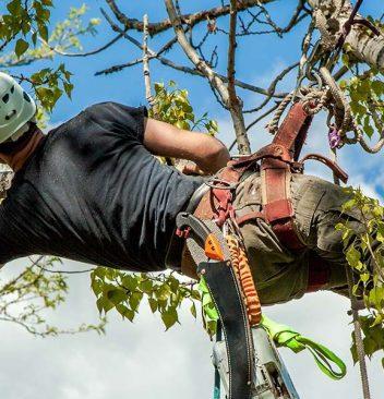 arborist education requirements
