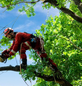 best-tree-trimming-service